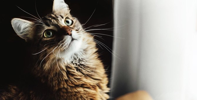 猫が『ときめいている』時にする仕草・行動5つ