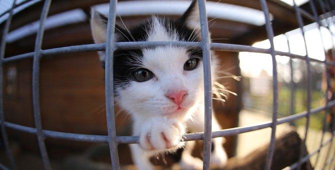 猫をケージ飼いする時にストレスを最小限におさえる方法