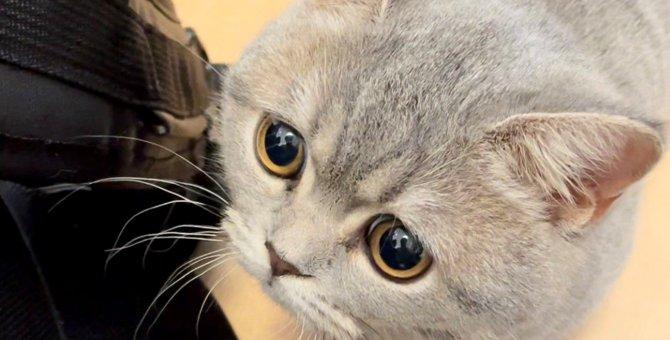 今日会社休みます!?有給休暇取得促進猫の罪作りな可愛さが話題