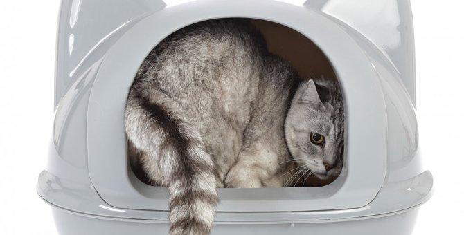 猫のおしっこの回数や量で健康状態を知る