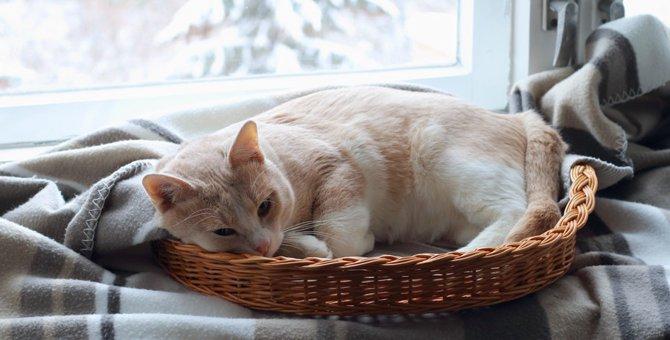 猫との生活を始めて変わる事と飼う前の心構え