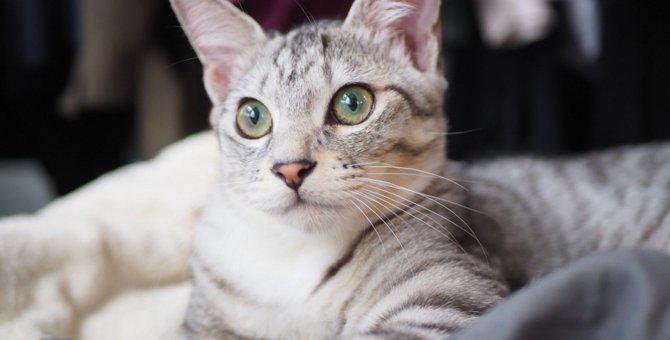 LAYLAの12猫占い【10/5~10/11】のあなたと猫ちゃんの運勢