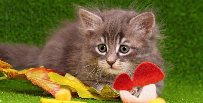 猫にきのこを食べさせても大丈夫?食べていい物・悪い物