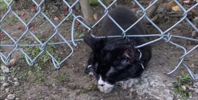 フェンスに挟まり身動きのできない子猫…発見者の悲痛な声に駆け付ける!