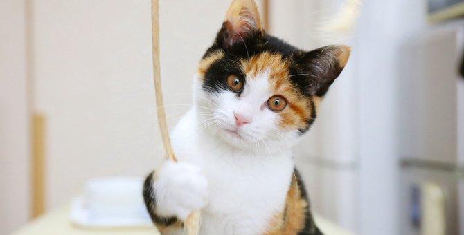 猫の利き手がわかる4つの方法