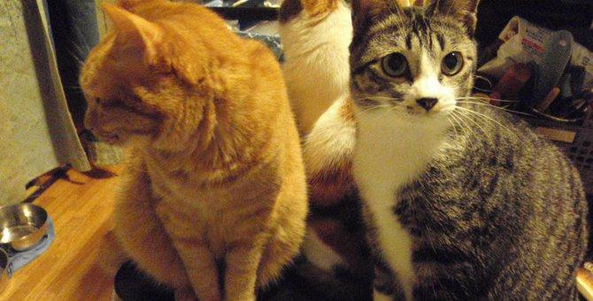 飼い主が離婚したら、猫はどうなる?経験談からひも解く今後の教訓