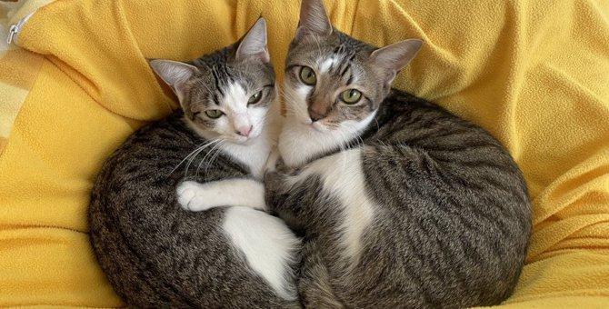 猫の『毛』の仕組みを徹底解説!危険を回避する驚きの役割とは?