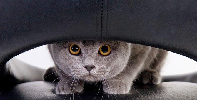 猫がドライヤーを嫌う理由と上手にかけるコツ