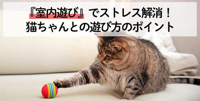 室内遊びでストレス解消!ねこちゃんとの遊び方のポイント