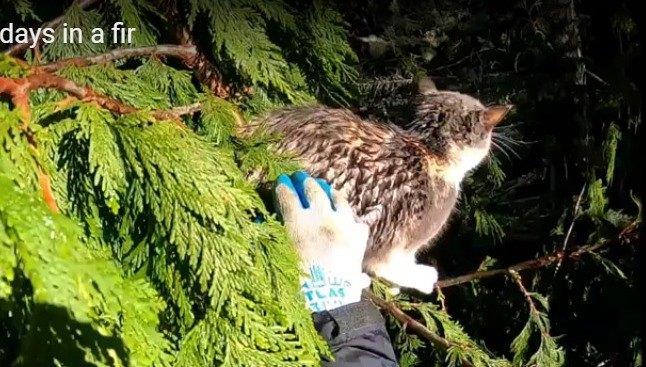 地上21メートルの木の上でずぶ濡れ…過酷な4日間を生き抜いた猫
