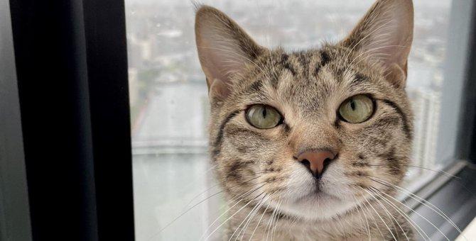 猫と『心の距離』を近づける3つの方法