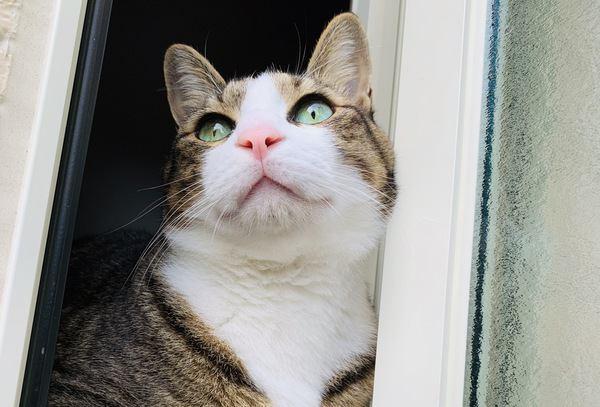 猫が家の外に出たがる心理と対処法