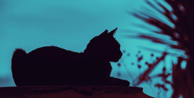 猫の留守番には電気(照明)は不要!理由と注意する事