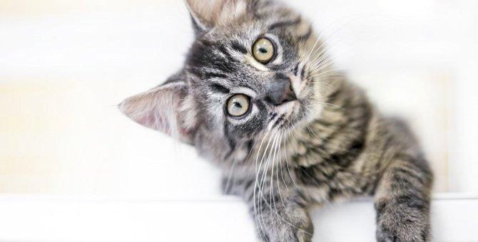 猫が『理解できない』と感じている飼い主の行動5つ