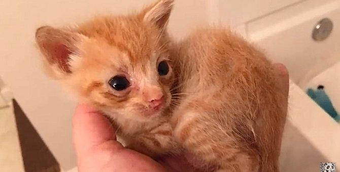 母がいない子猫と、子猫を失った母猫の奇跡の出逢い