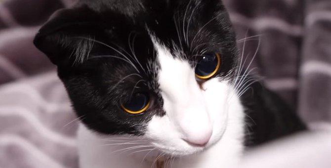 お目目がキュイ~ン!黒目がみるみる大きくなる猫ちゃん