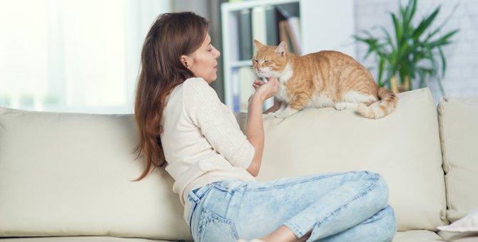 猫に好印象を与える7つのテクニック