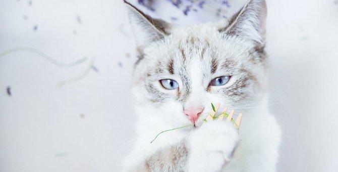 猫はゴキブリ対策に有効?猫がいる家庭におすすめなゴキブリ対策など