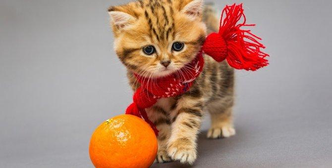 猫にオレンジを与えてはいけない!食べたときの対処法