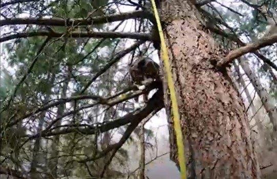コヨーテに追われ木に登った猫…決死の救助活動の行方は!?