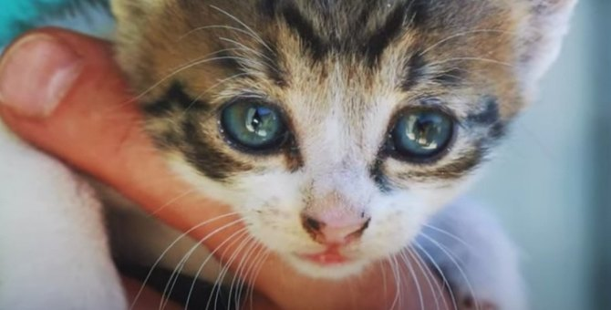 壁の隙間から抜け出せない子猫…決死の救出活動の行方は?