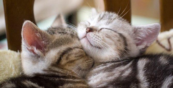 猫を2匹飼うメリット、デメリットお迎えの時期や飼い方まで