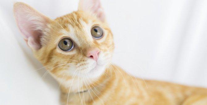 猫が吐く危険な頻度と考えられる病気