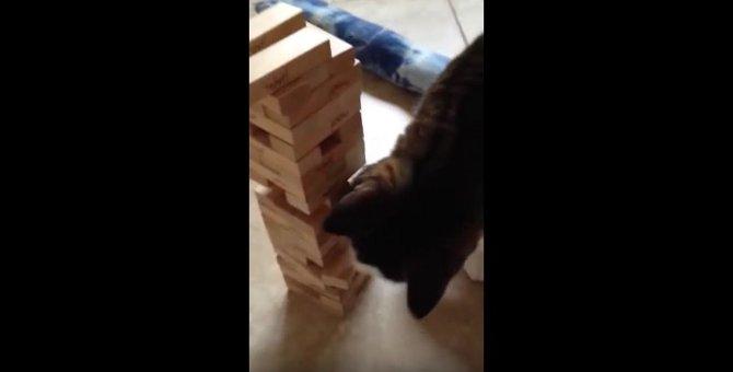 器用すぎ!飼い主さんとジェンガで遊ぶ猫がすごい!