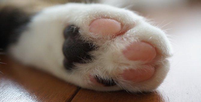 いくつ知ってる?猫の豆知識14選