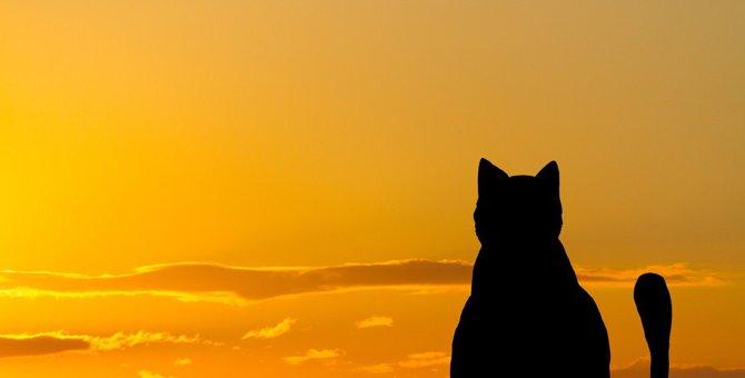 猫の世代別『5大死因』とは?悲しい結末を防ぐ対策3つ