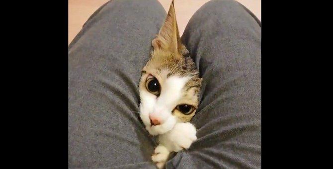 28万いいね!話題のひょっこりニャンはレスキューされた猫だった!