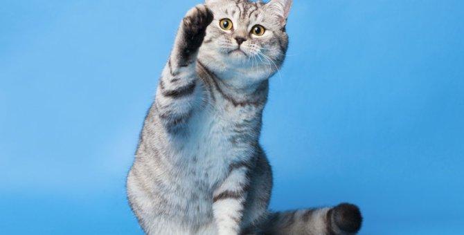 猫パンチの理由とその3つの意味