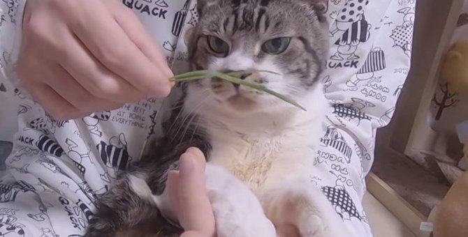 大好きなパパとウットリ猫草タイムを楽しむ猫ちゃん