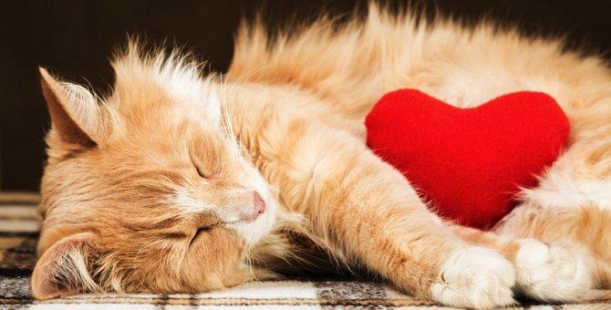 猫が心臓病になった時の症状や原因、治療の方法