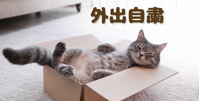 【猫さま推奨】不要不急の外出自粛と在宅勤務で感染拡大を食い止めよ!