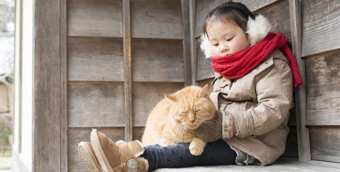 『野良猫に好かれる人』に共通すること3つ