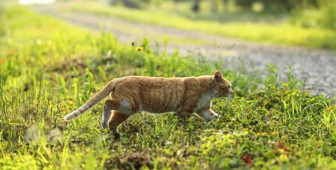 迷子の猫を探すときの4つのポイント