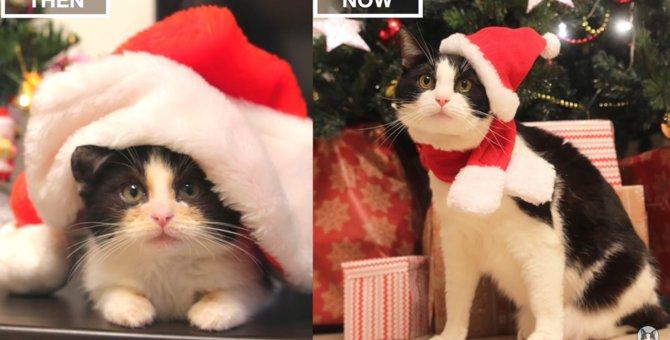 感慨深い…猫が生後3ヶ月だった時と今の3歳を比較した動画
