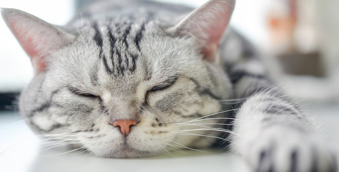 『暑がっている猫』が見せる5つのサインと対処法