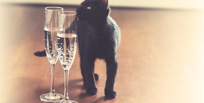 猫に炭酸水を飲ませても大丈夫?与え方と注意点