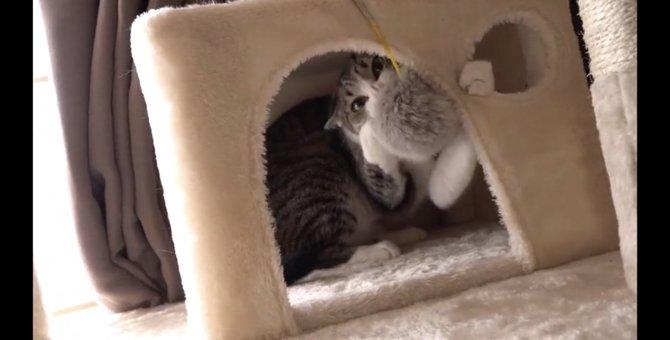 猫のおもちゃ争奪戦!最後までおもちゃから目を離すべからず
