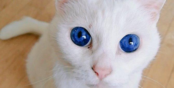 【大人気】サファイアのような瞳♡まるで子猫のように若々しい猫さん!