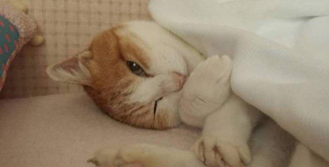 庭にやってきた猫「ニャン」の一生。一緒に暮らした16年間