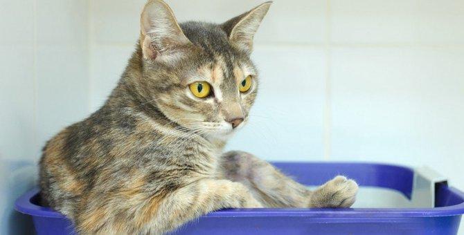 猫の『膀胱炎』は再発しやすい?気になる症状6つと予防法を解説!