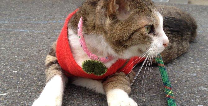寝てばかりの高齢猫に気分転換を!散歩で猫ちゃんの脳と心をリフレッシュ!