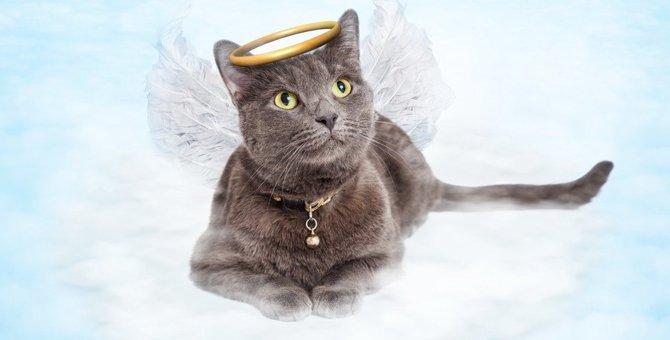 猫にも初七日や四十九日はある?