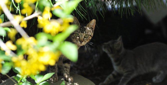 怪我をした野良猫がいたらどうするべき?5つの対処法