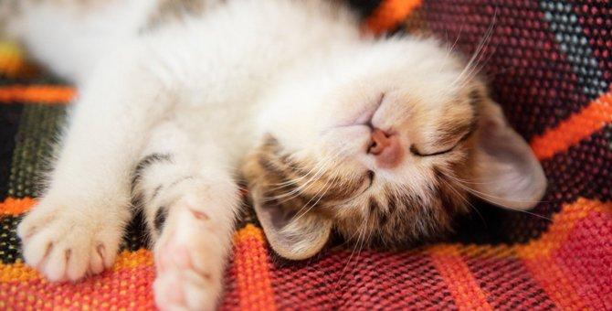 人のピリピリ伝わってるかも…愛猫をリラックスさせる方法5つ