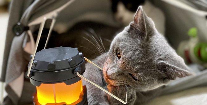 【共感の嵐】猫の飼い主あるある?『猫と暮らして変わったこと』ランキングTOP3
