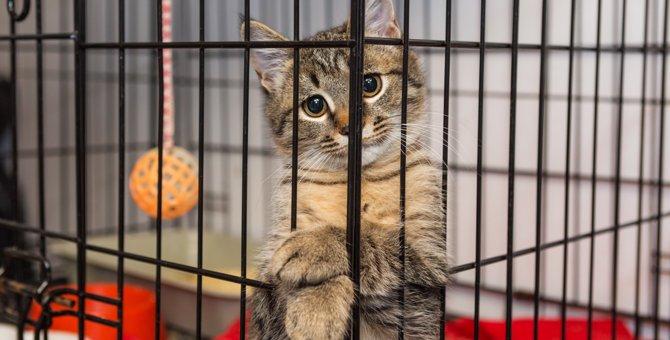 猫にとってケージ飼いは安心・安全な場所のひとつ